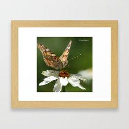 Butterfly macro photography Framed Art Print