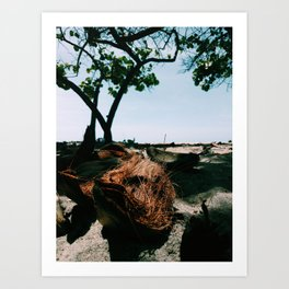 Open coconut laying under palms in colombian caribbean Art Print