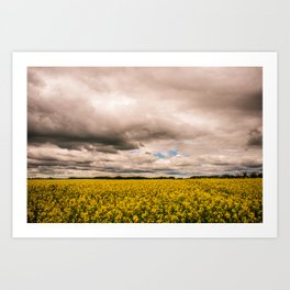 flower fields - horizontal Art Print