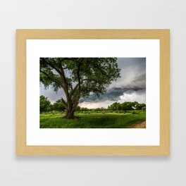 Big Tree - Tall Cottonwood and Passing Storm in Texas Framed Art Print