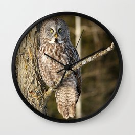 Basking in the afternoon sun Wall Clock
