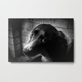 The Lonely Pooch Metal Print