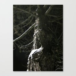 The Tree Shivered Canvas Print