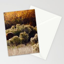 Palomino Pony in Autumn Golds photography by CheyAnne Sexton Stationery Cards