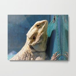Lemmy the bearded dragon. Metal Print