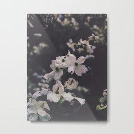Dogwoods in Spring Metal Print