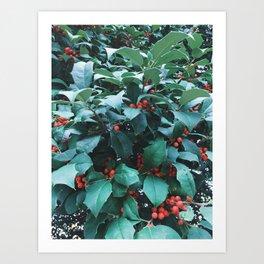 Sprigs of Holly Art Print