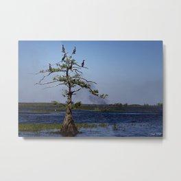 Cormorant Tree Metal Print