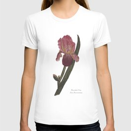 Bearded Iris: Iris Germanica T-shirt