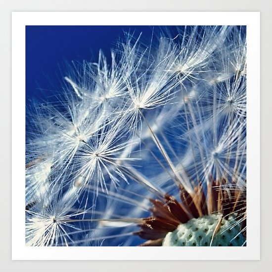 Dandelion Seeds Art Print