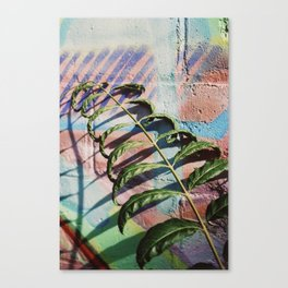 Withering Plant in Graffiti Alley Canvas Print