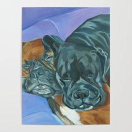 Boxer Buddies Dog Portrait Poster
