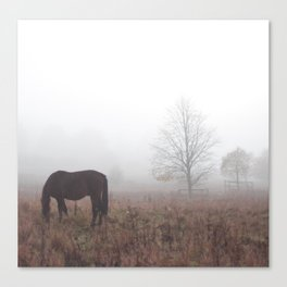 Horse in the Mist Canvas Print