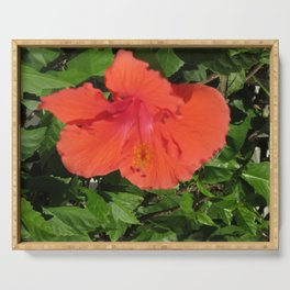 single red hibiscus Serving Tray