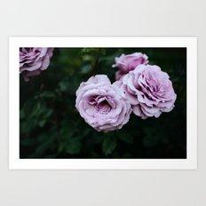 Lavender Roses Art Print