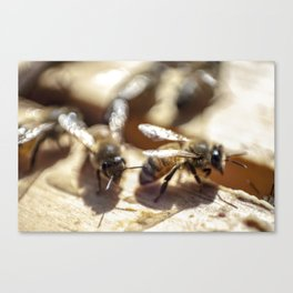 2 Bee or Not 2 Bee Canvas Print