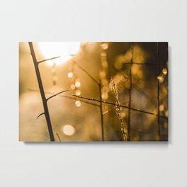 Warm Winter Light Metal Print