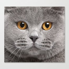 Cat in Grey Canvas Print