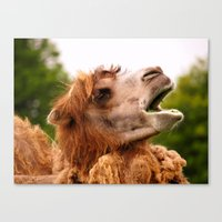 camel Canvas Prints featuring Camel by GardenGnomePhotography