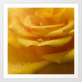 Macro of Water Drops on Yellow Rose Art Print