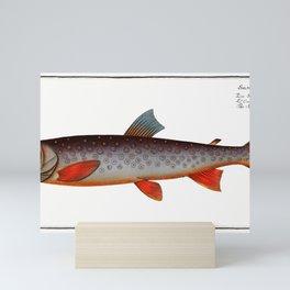 Salveling (Salmo Salvelinus) from Ichtylogie ou Histoire naturelle generale et particuliere des pois Mini Art Print