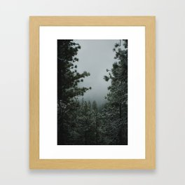 Backwoods Winter: Ponderosa Pines, Washington Framed Art Print