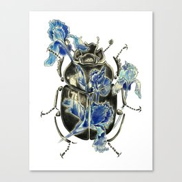 Beetle in blue irises Canvas Print