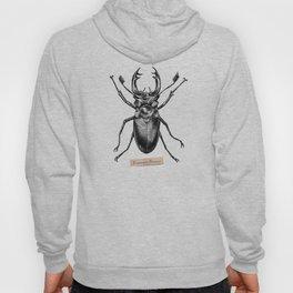 Stag Beetle - Lucanus Cervus Hoody