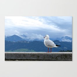 Swiss Gull Canvas Print