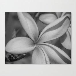 Black and White Frangipani Canvas Print