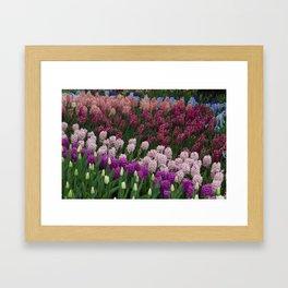 Hyacinth Springtime Flower Power Garden #1 Framed Art Print