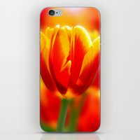 tulip iPhone & iPod Skins featuring Tulip by Tracie Brown
