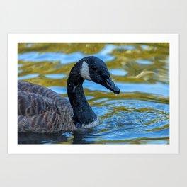 Canadian Goose Art Print