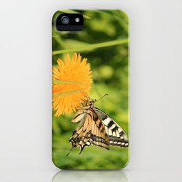 The Old World swallowtail (Papilio machaon) iPhone Case