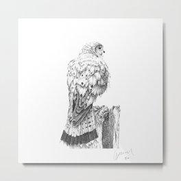 Bird of Prey - Kestrel  Metal Print