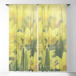 Bright Yellow Narcissus Sheer Curtain