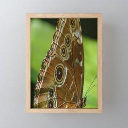 Beautiful Butterfly Wings of Meadow Brown Framed Mini Art Print