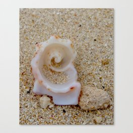 Spiral Shell ~ Bahamas Canvas Print
