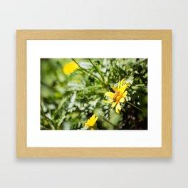 Bee-utiful Framed Art Print
