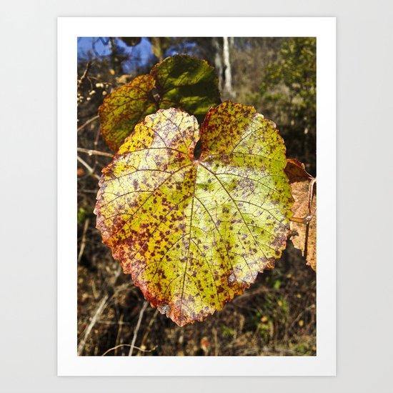 Autumn In The Wild Art Print