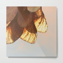 Cluster of lightened leaves Metal Print
