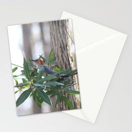 Red-Bellied Woodpecker Stationery Cards