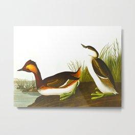 Eared Grebe Bird Metal Print