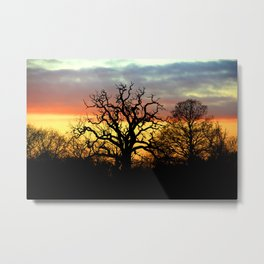 Winter sunset behind a curly tree Metal Print