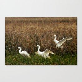 Egret Landing Canvas Print