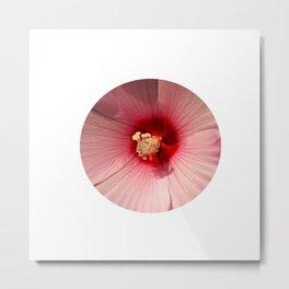 Pink Hibiscus Close-up Flower Photography Metal Print