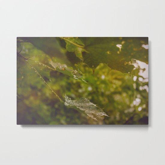 Rainy autumn leaves Metal Print