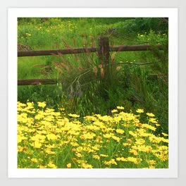 Daisies and Plumes at the Split Rail Fence Art Print