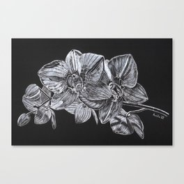 Silver Orchid Canvas Print