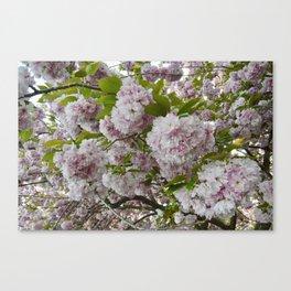 Cherry Blossom Poms Canvas Print